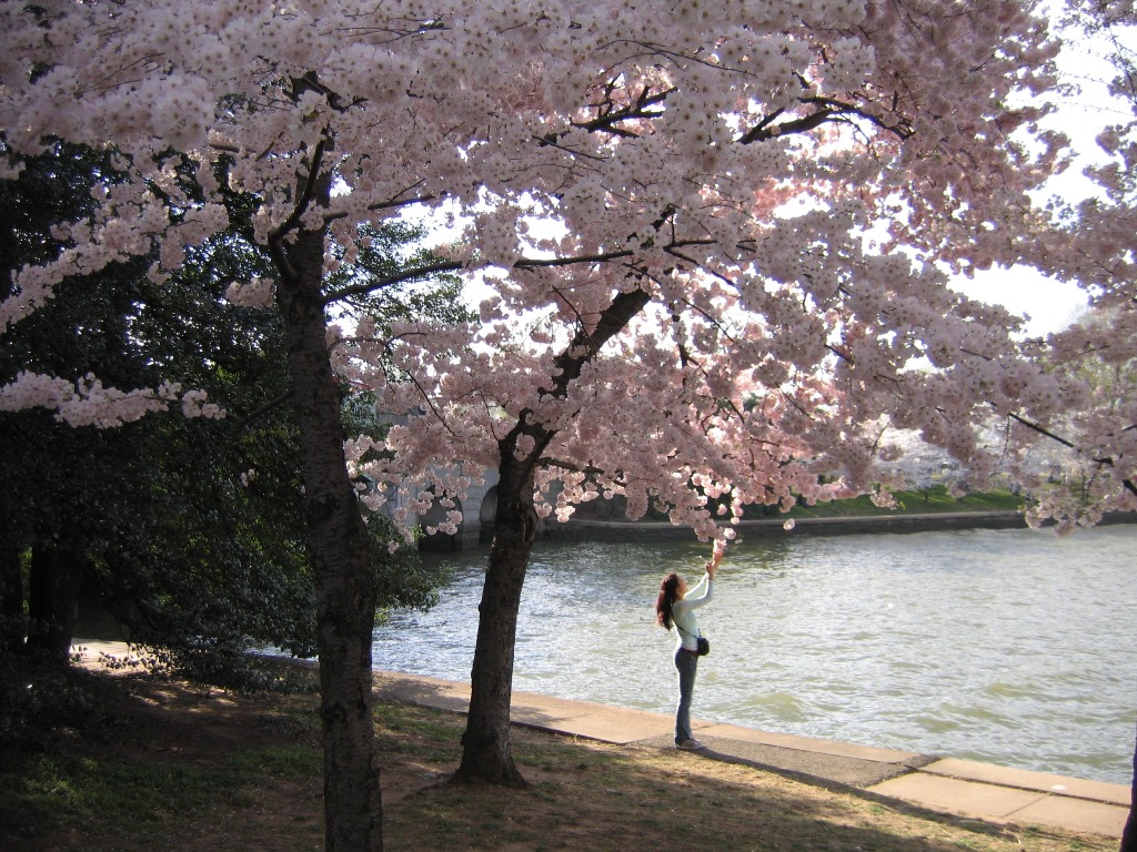 Great Cherry Blossom Scavenger Hunt of Washington, DC