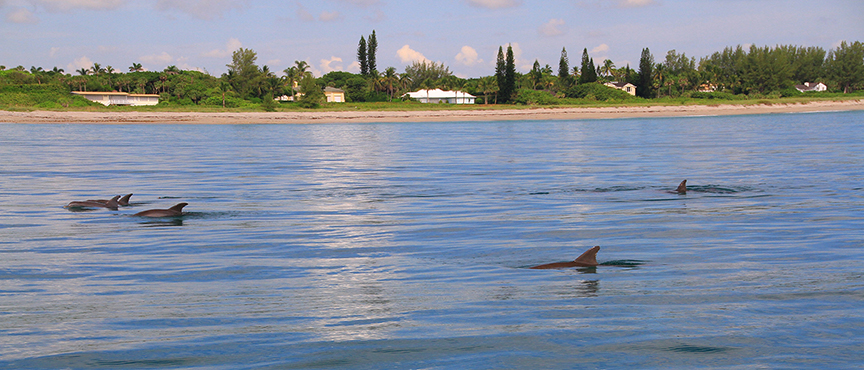 Dolphins along the coast