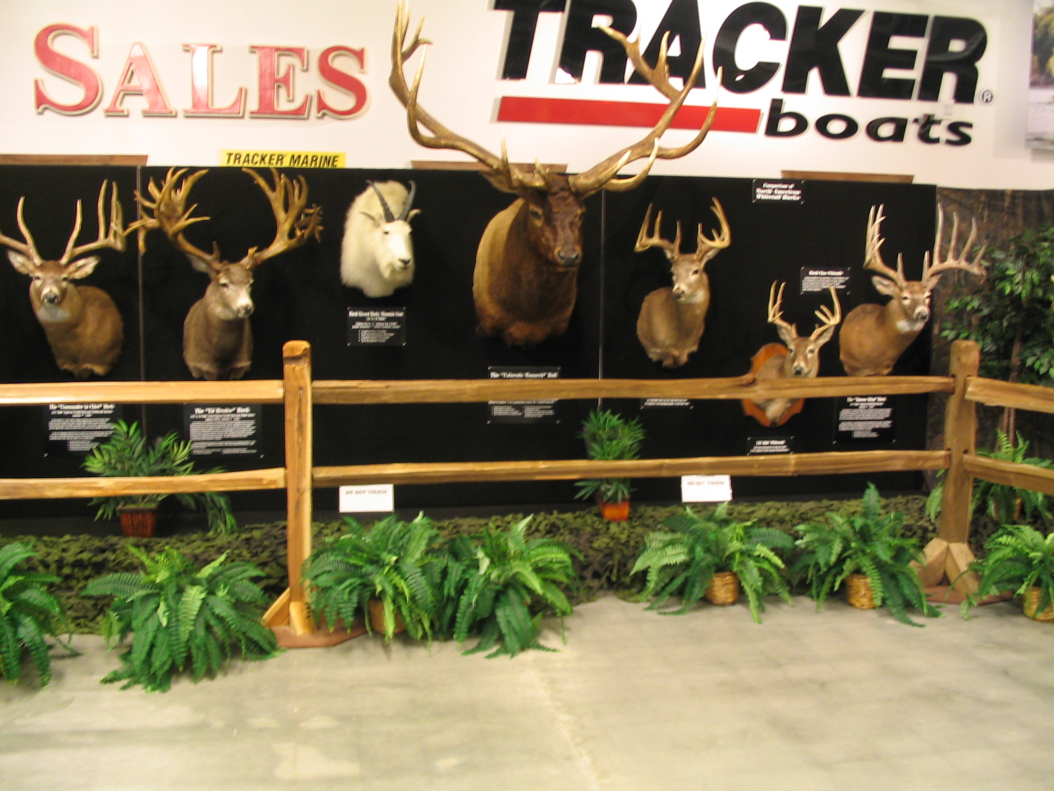 World Record Trophy Mount Exhibit at Lakeside Church at Lake Oconee for Wild Game Supper March 8, 9, 2019