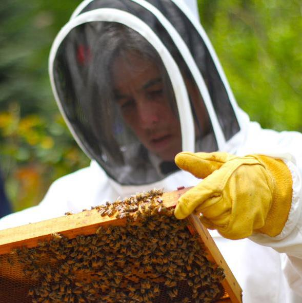 Vera with her bees