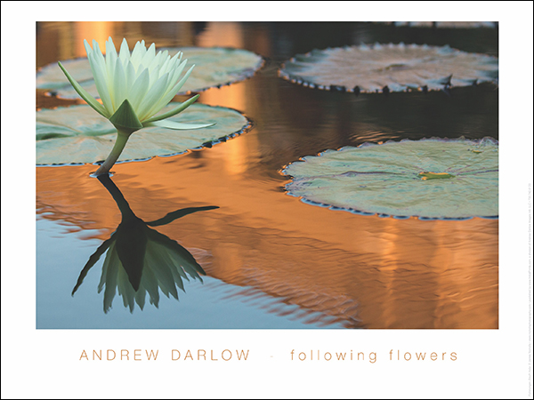 Following Flowers Initial Print by Andrew Darlow
