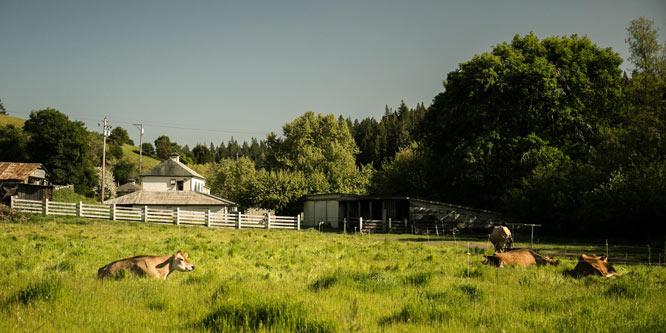 Green Valley Farm + Mill