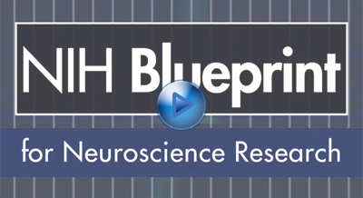 Meet with the office of translational research at nindsnih about blueprint neurotherapeutics network malvernweather Choice Image