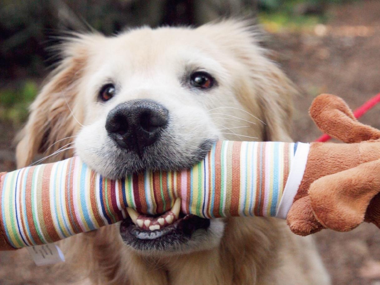 PAWS Puppy