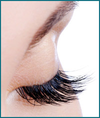 Experience the Ultimate Brow Wow Eye Treatment!
