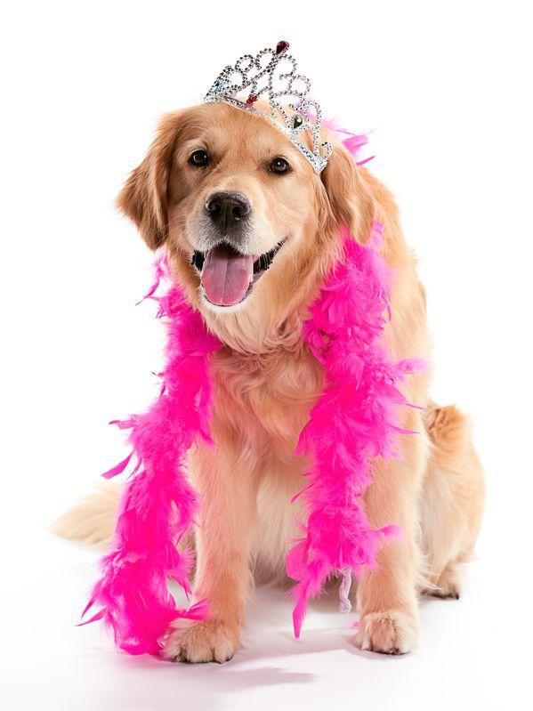 Pup Crawl Costume Contest