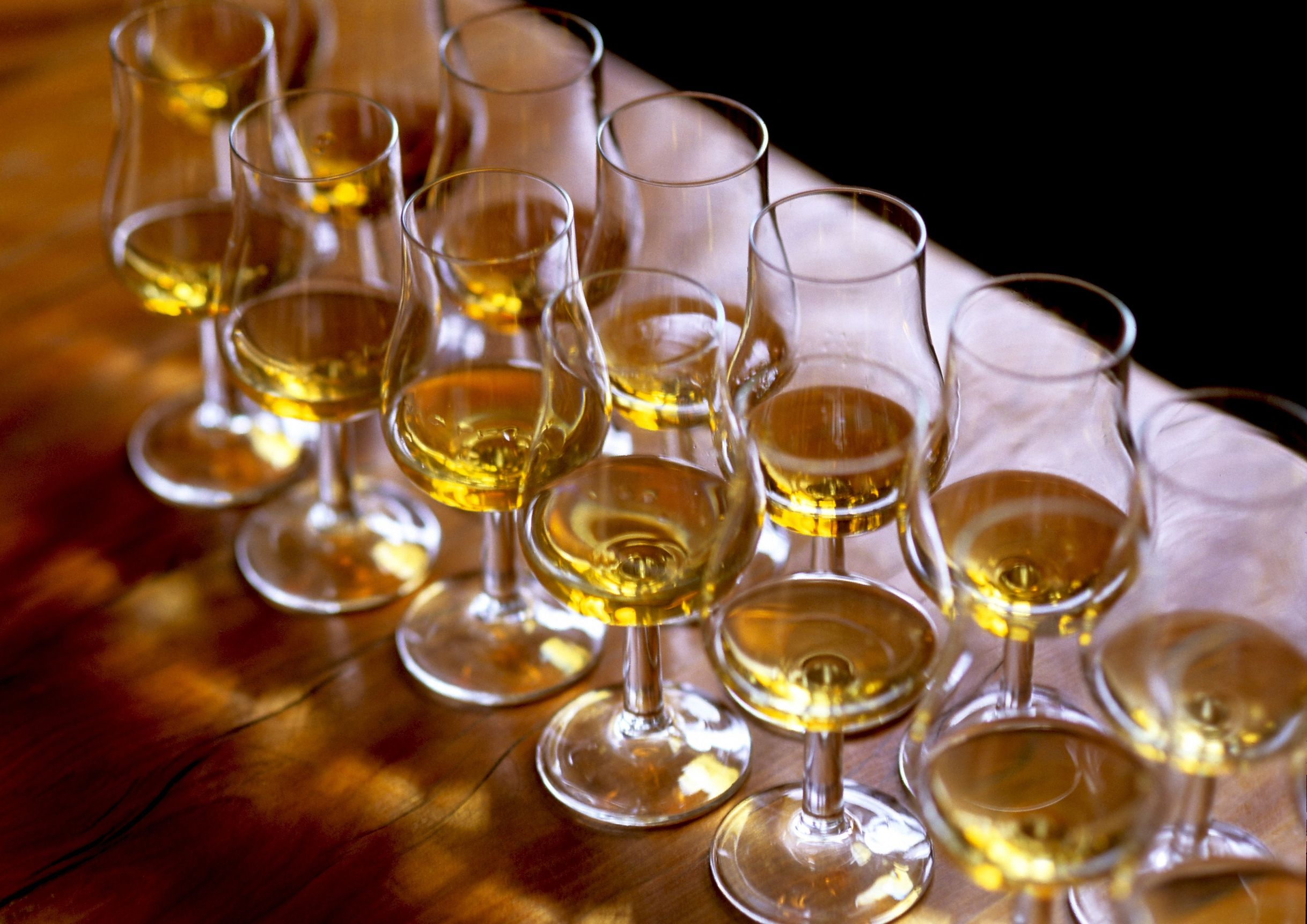 Scotch glasses lined up for Scotch tasting