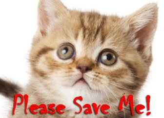 Save the kitten