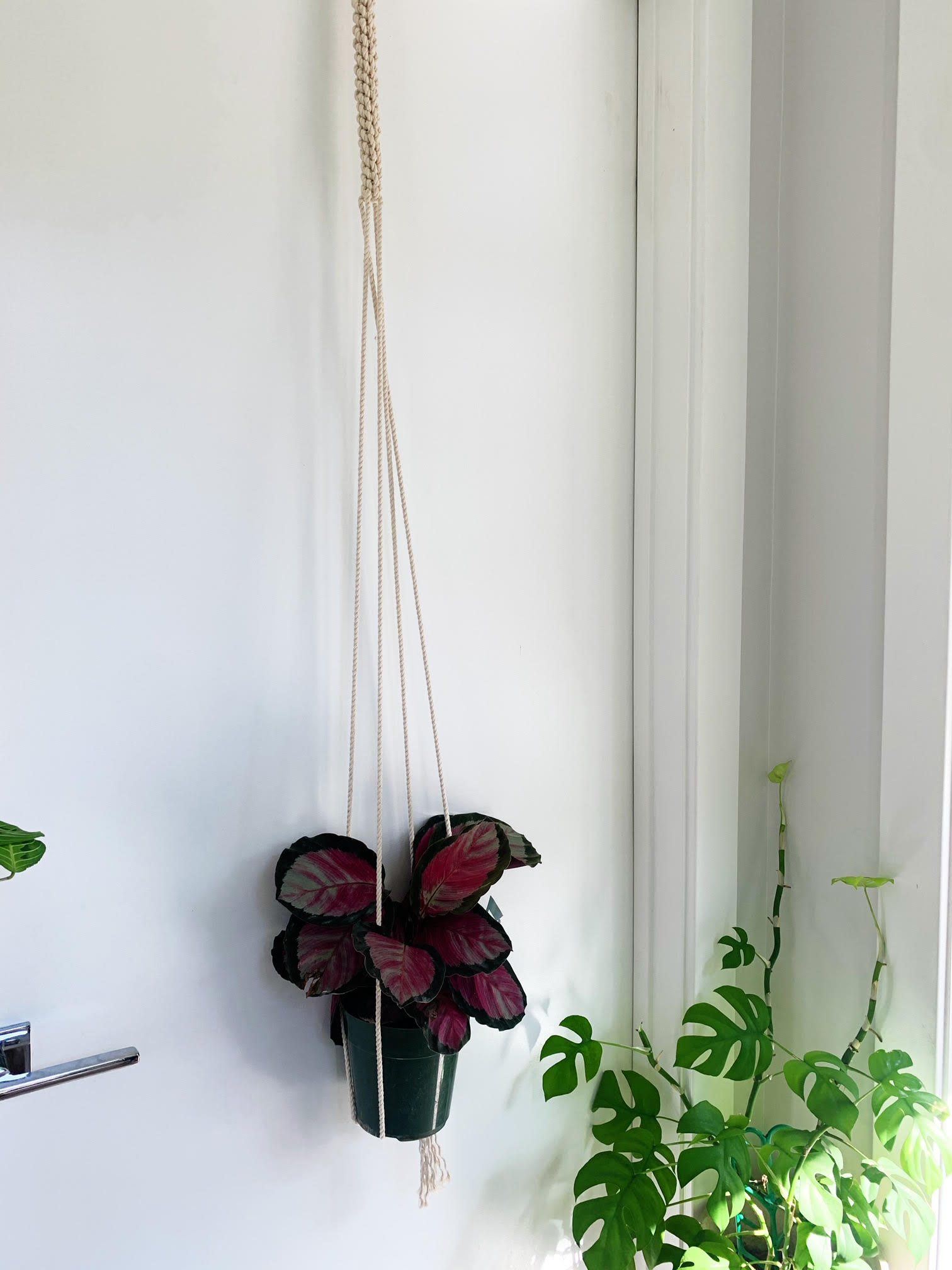 Single Plant and Macrame Plant Hanger