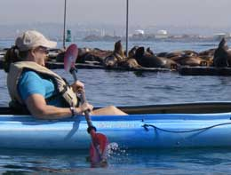 Kayaking with sea lions on san diego bay