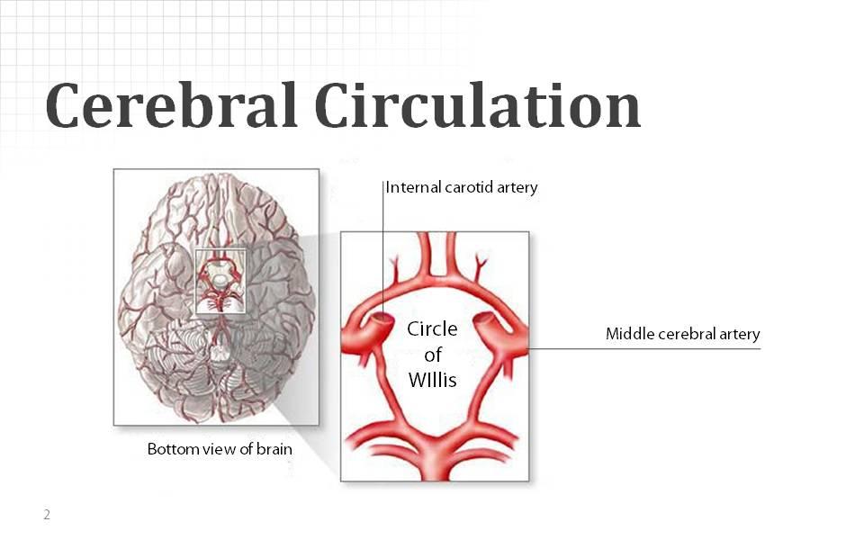 Neurology Slide Sample