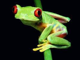 Eat That Frog! Goal Setting, Prioritizing & Time Management...