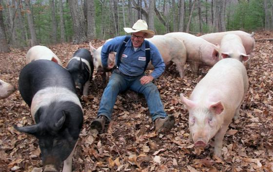 Joel with pigs