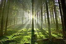 Zen Forest
