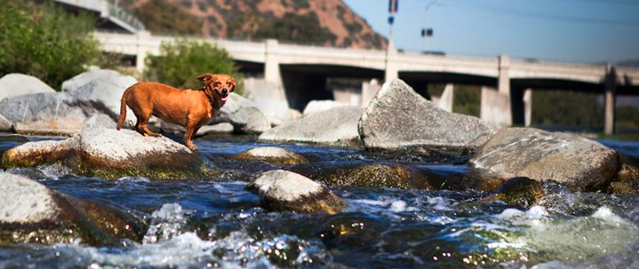 Zoe loves the LA River! :)