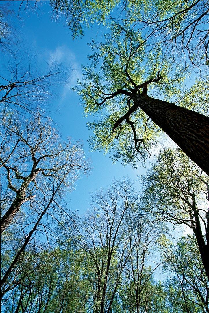 Donaldson's Woods Nature Preserve