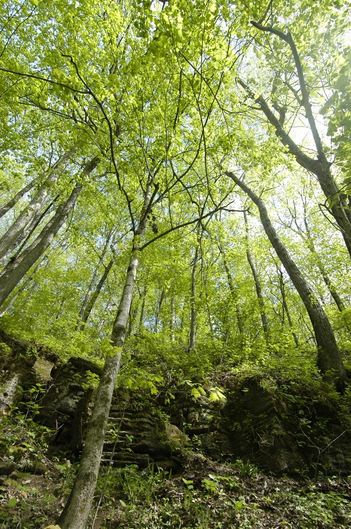 Calli Nature Preserve