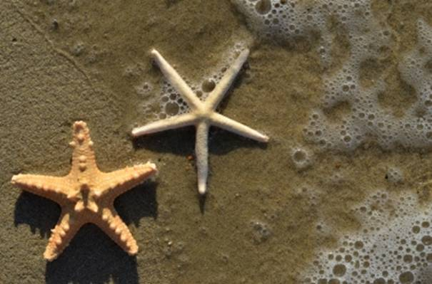 Starfish Troopers - the way forward?