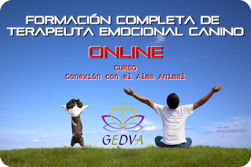 Formación Terapeuta Emocional Canino Conexión Alma Animal Online