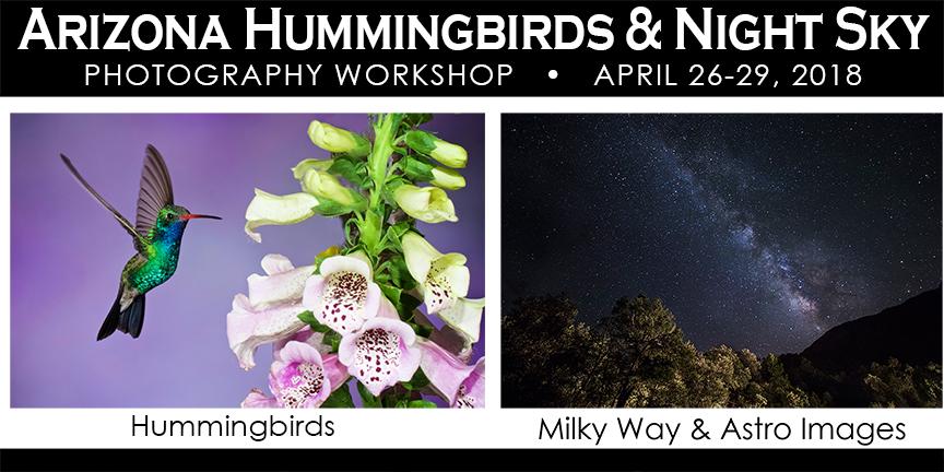 Arizona Hummingbird Photography Workshop