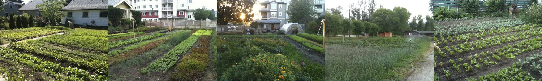 Green City Acres urban farm plots