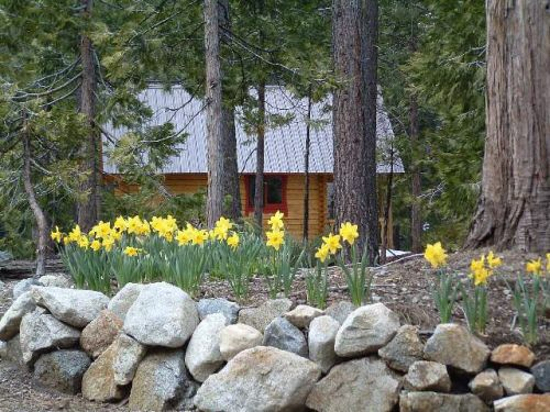 cabin flowers and trees