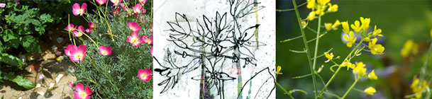 garden flowers photos and pen and ink illustration