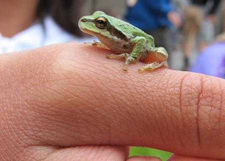 Frog on Hand