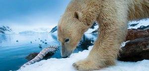 bear by ice
