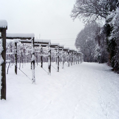 Snow Image Bolney Wine Estate