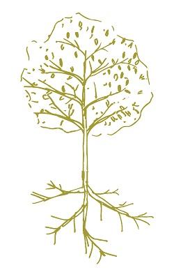Professional Development Tree