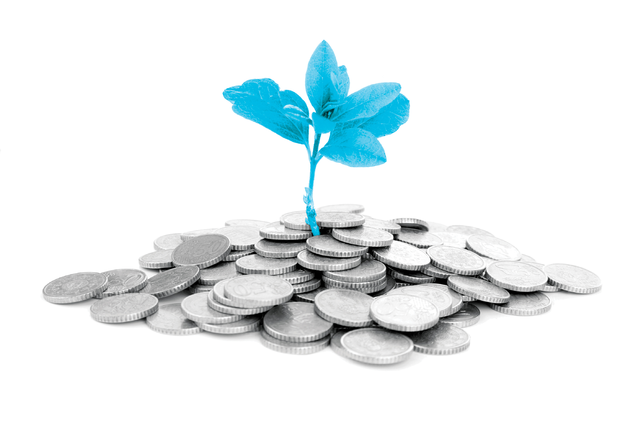 Coin and flowers image