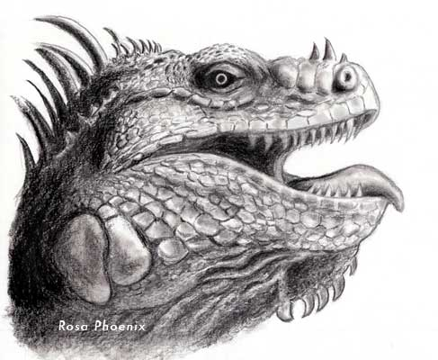 Dragon pencil drawing by Rosa Phoenix