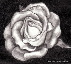 rose pencil drawing by Rosa Phoenix