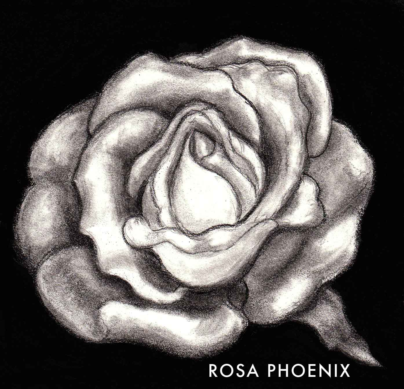 pencil drawing rose by Rosa Phoenix