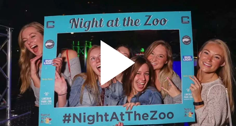 Night at the Zoo Video Link