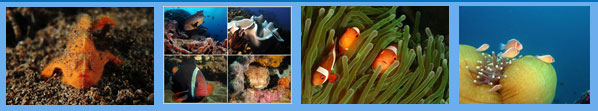 Dumaguette Phillipines Atlantis Resort Leslie ONeill Scuba Explorers