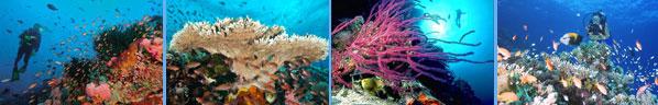 Puerto Galera Atlantis Phillipines Scuba Explorers Leslie ONeill
