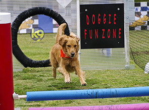 Doggie Fun Zone