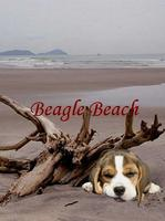 Beagle Beach playing the best of The Beatles, The Eagles and The...