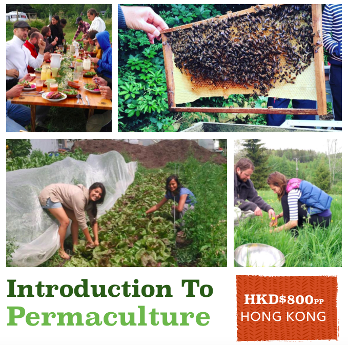 Growingsmart Introduction to Permaculture Weekend