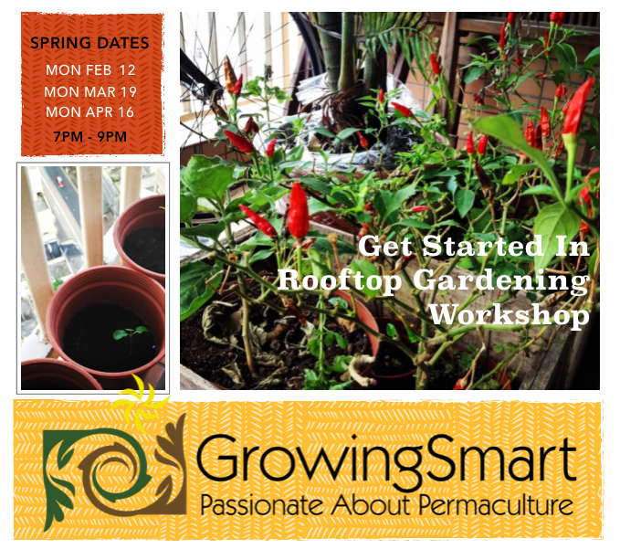 Introduction to Rooftop Gardening with Growingsmart