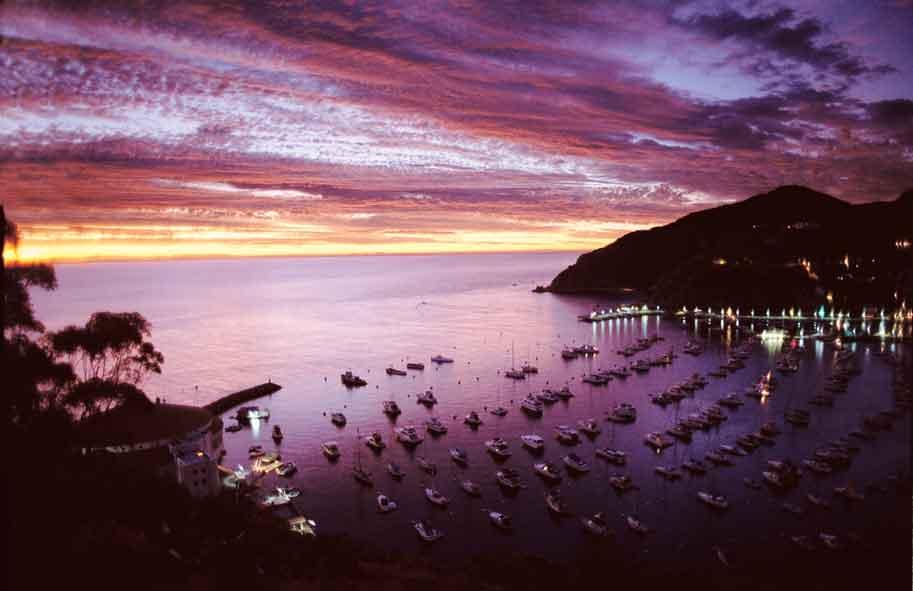 Purple Sunset of Harbor