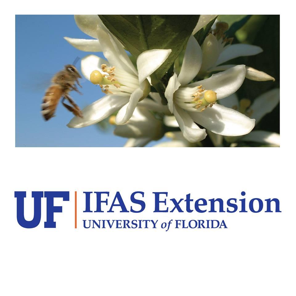 Logo Bee Image