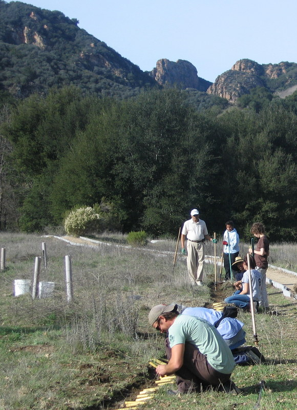 Volunteers helping to plant native grasses at Malibu Creek State Park