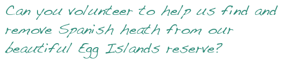 Can you volunteer to help us find and remove Spanish heath from our beautiful Egg Islands reserve?