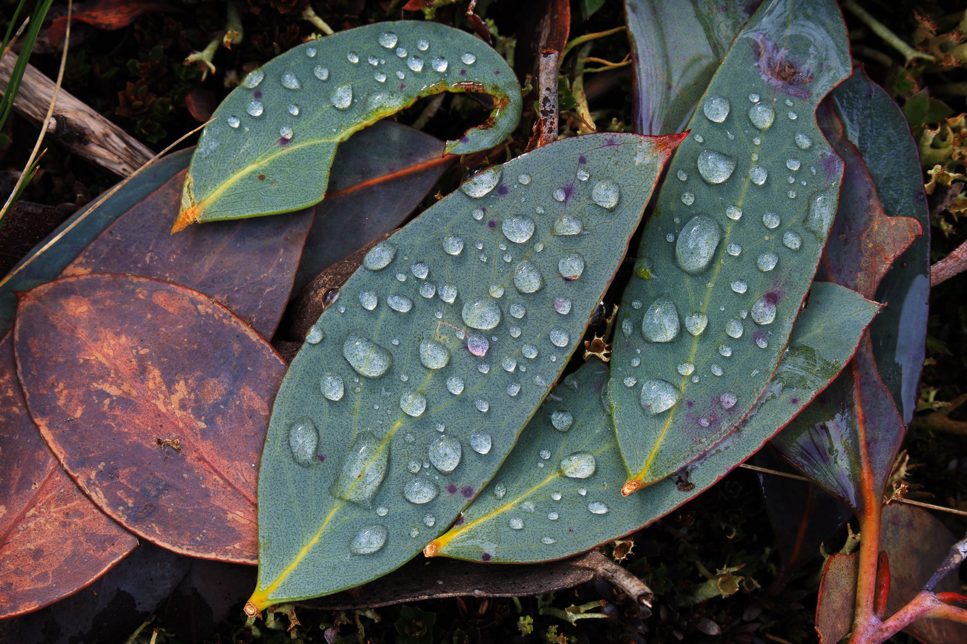 Leaf with dew drops Arwen Dyer