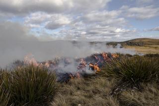 Vale of Belvoir ecological burn- Heath Holden