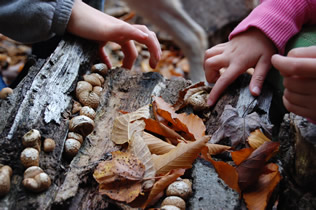 hands looking for fungi