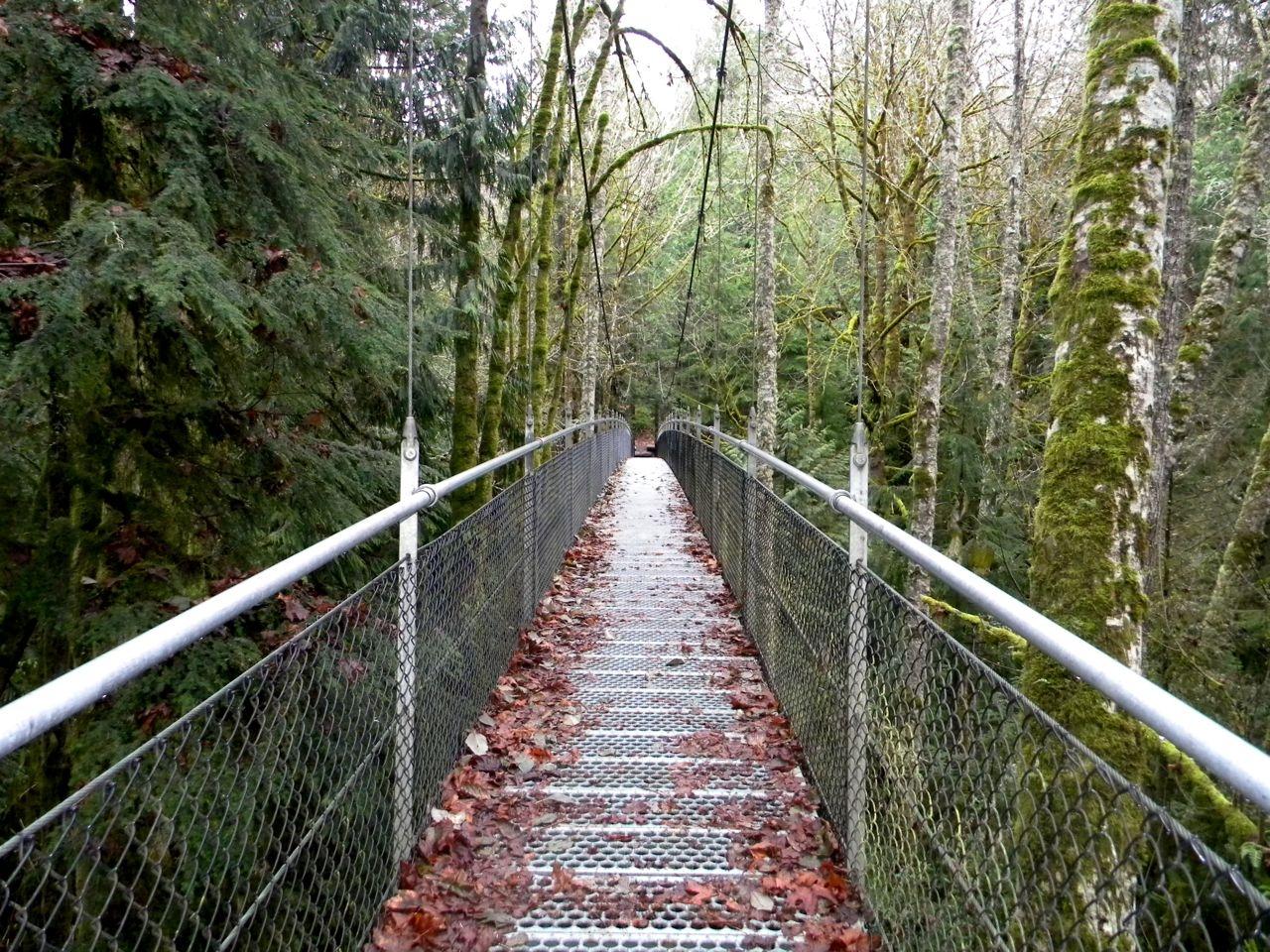 suspension bridge covered in leaves